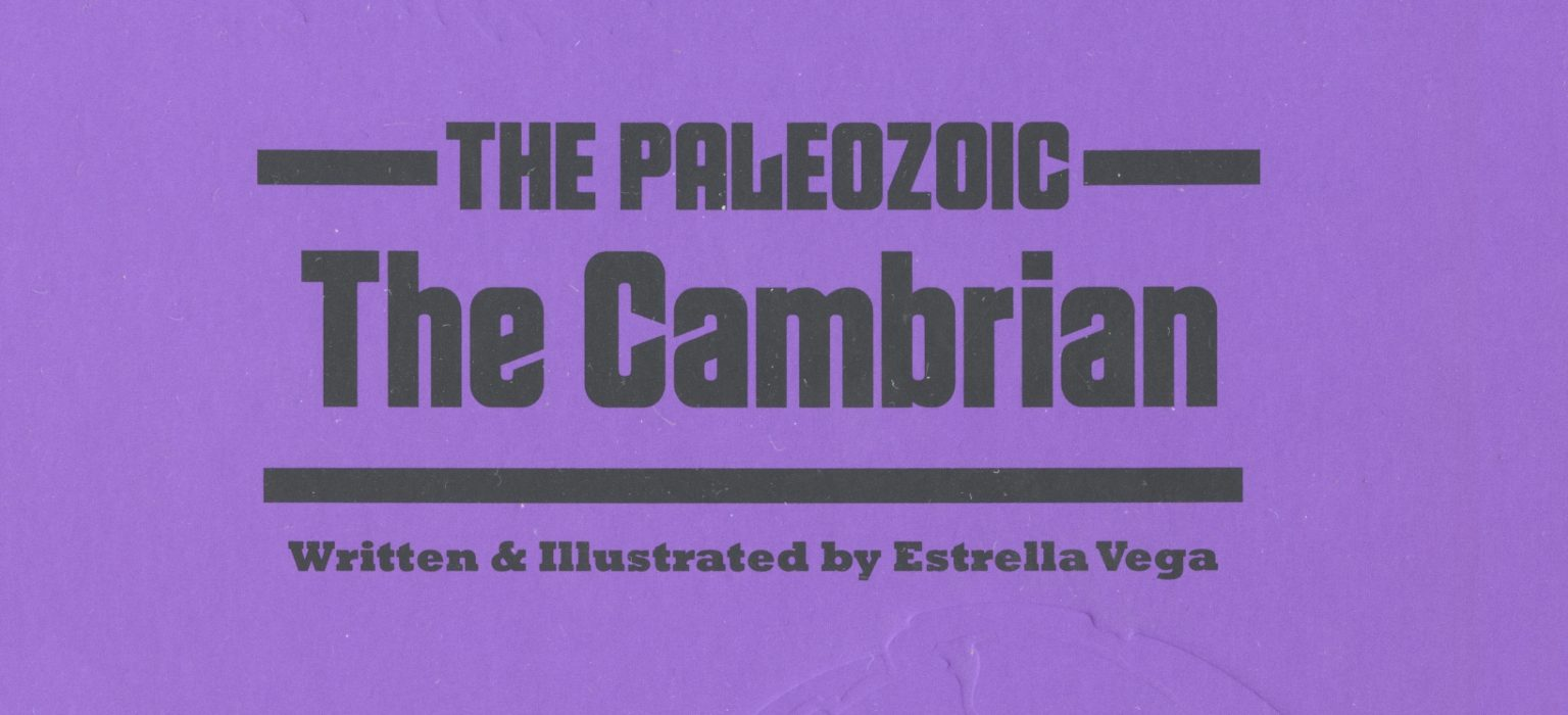 The Cambrian feature